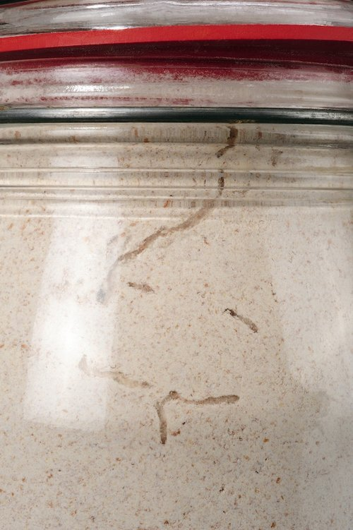 Pantry month larvae tunnels in flour image